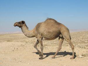 qué animales hay en el desierto