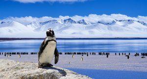 qué animales viven en el polo norte