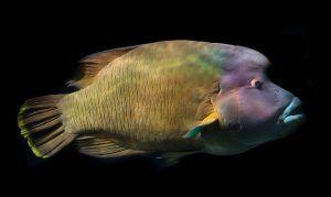 Qué animales acuáticos están en peligro de extinción