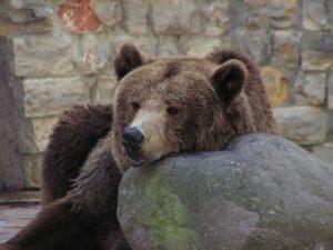 ¿ Qué animales hibernan?
