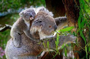 ¿ Qué animales son marsupiales?