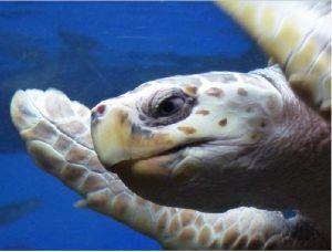 Qué animales acuáticos respiran por los pulmones