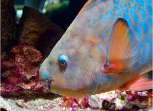 ¿ Qué animales acuáticos se alimentan de plantas ?