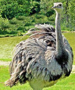 ¿ Qué animales son omnívoros?