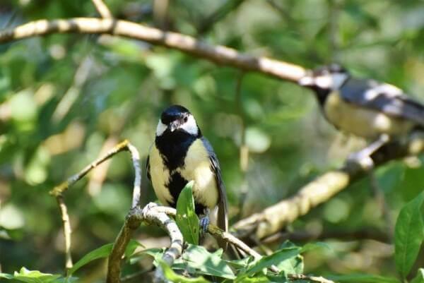 Los pájaros son una especie alada, en su mayoría de poco tamaño quizás por ello tienen tantos depredadores, incluyendo a los humanos. Los pájaros son una especie muy amplia, los hay grandes y salvajes hasta los pequeños, indefensos y adorables.¿Qué animales comen pájaros?