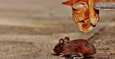 ¿Qué animales comen ratones?