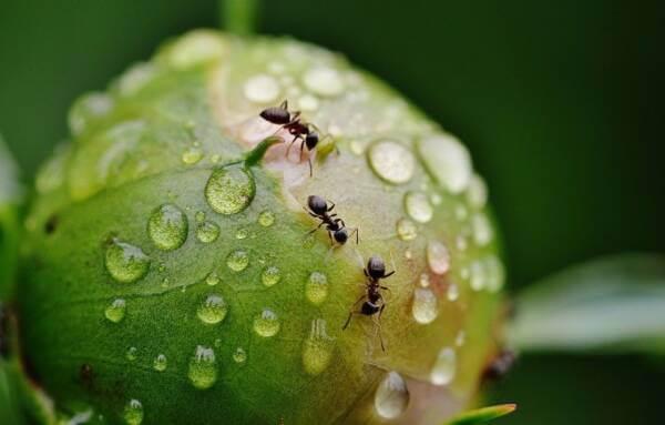 animales comen hormigas