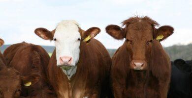 ¿Qué animales de granja son más rentables?