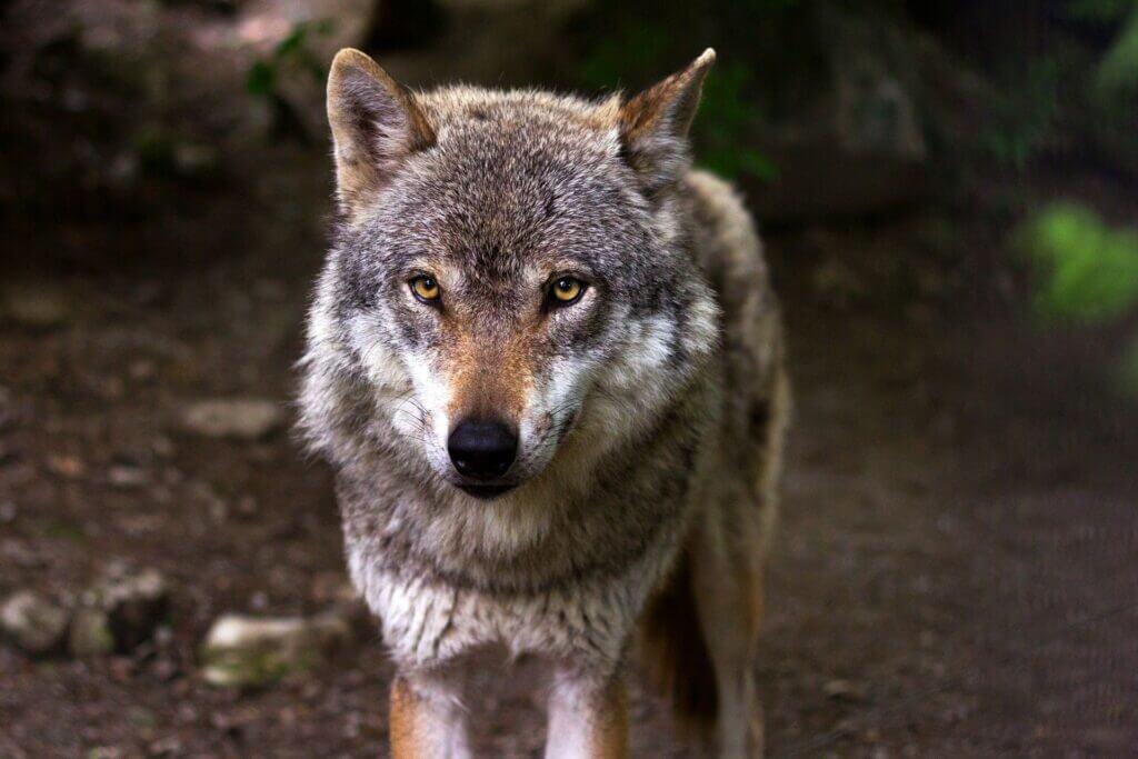 están en peligro de extinción en Andalucía