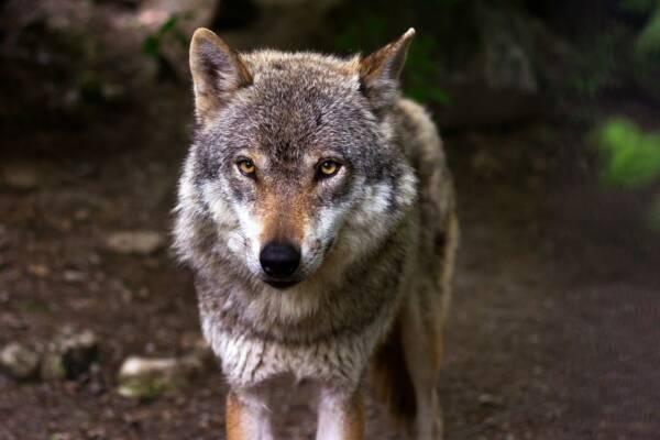 En Peligro De Extinción: ¿Qué Animales Están En Peligro De Extinción En