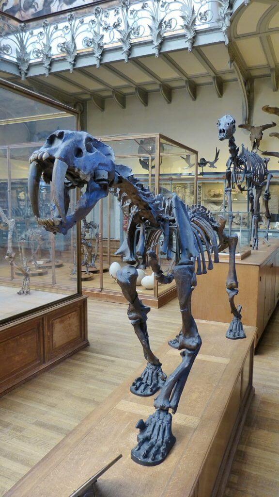 existieron en el paleolítico
