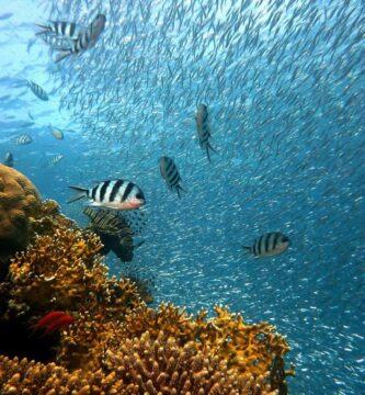 forman arrecife de coral