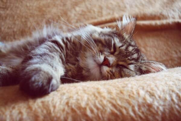 que animales duermen mas