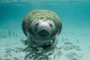 animales en peligro de extinción mexico