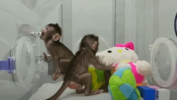 animales clonados