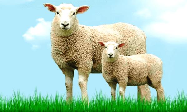que animales fueron clonados