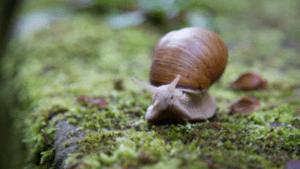 animales que comen caracoles