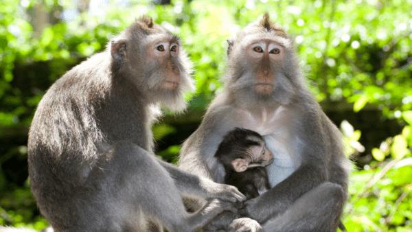 animales que dan leche materna