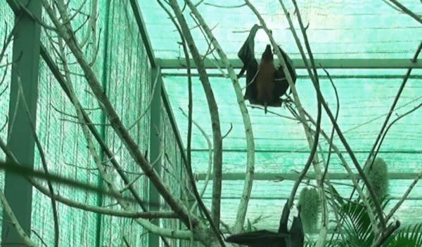 Como defecan los murcielagos