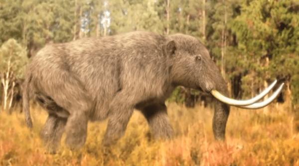 que mamiferos grandes cazaban los primeros humanos