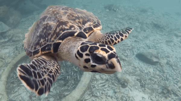 que animales acuaticos estan en peligro de estinción