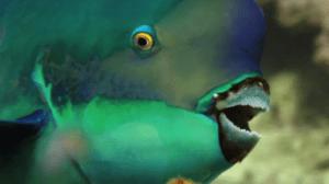 que animales acuaticos se alimentan de planatas