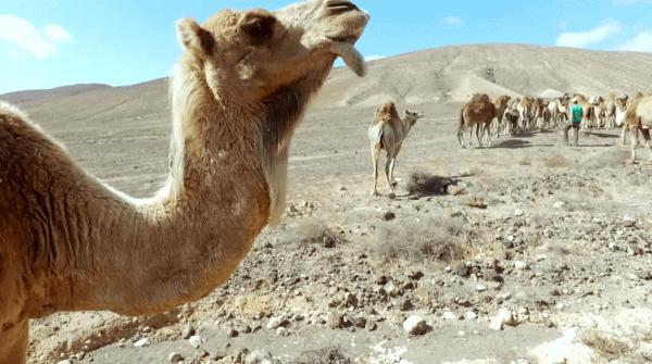 que animales hay en el desierto